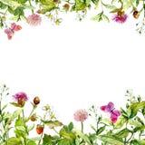 Wiosna, lato ogród: kwiaty, trawa, ziele, motyle motyla opadowy kwiecisty kwiatów serca wzoru kolor żółty akwarela Obraz Royalty Free