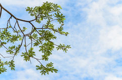 Wiosna liścia zielony tło Zdjęcie Stock