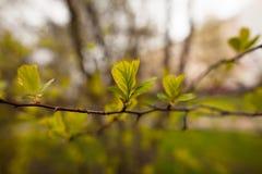 Wiosna liście Obrazy Stock