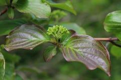 Wiosna liście Zdjęcie Stock