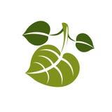 Wiosna liścia prosta wektorowa ikona, natura i ogrodnictwo tematu illus, Fotografia Stock