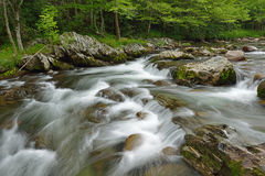 Wiosna, Mała Gołębia rzeka Fotografia Royalty Free
