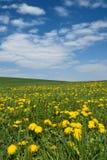 Wiosna madow Obraz Stock