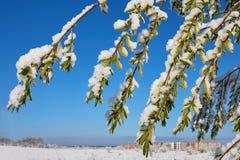 Wiosna Maja ranek Zdjęcie Royalty Free