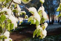 Wiosna Maja ranek Obraz Stock
