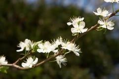 wiosna makro Zdjęcie Royalty Free
