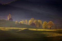 Wiosna mgłowy ranek przy lasową krawędzią obraz royalty free