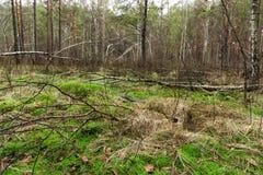 Wiosna mokry mieszany las z trwanie wodą p i nieżywymi drzewami zdjęcie royalty free