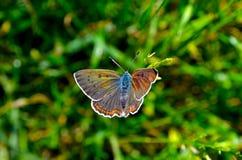 Wiosna motyl Obrazy Stock