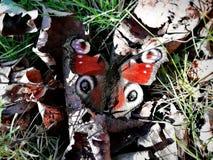 Wiosna motyl na słonecznym dniu zdjęcia royalty free
