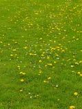 Wiosna na łące Zdjęcie Stock