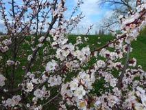 Wiosna na stronie droga Zdjęcia Royalty Free