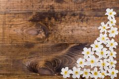Wiosna nartsysy Obrazy Royalty Free