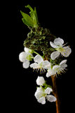 wiosna niespodzianka zdjęcie stock