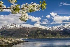 wiosna norway Zdjęcie Stock