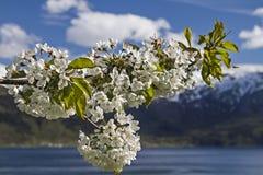 wiosna norway Zdjęcia Stock