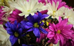 Wiosna odory obraz royalty free