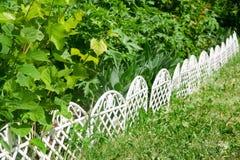 Wiosna ogród z gronowymi liśćmi Zdjęcia Royalty Free