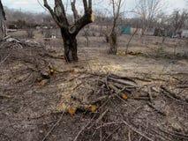 Wiosna ogród z nagimi drzewami i przycinać gałąź na ziemi Pojęcie opieka i odmładzanie ogród, fotografia stock