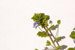 Wiosna ogródu kwiaty Zdjęcia Stock