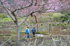 wiosna ogrodowa obraz stock