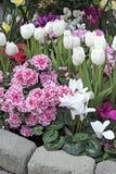 wiosna ogrodowa Fotografia Stock
