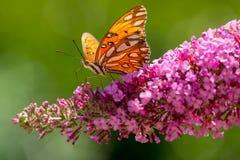 wiosna ogrodowa Zdjęcie Royalty Free
