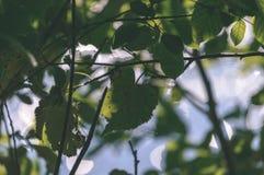 wiosna opuszcza bujny z plamy tłem - rocznika filmu spojrzenie fotografia stock