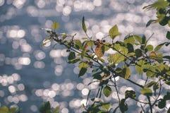 wiosna opuszcza bujny z plamy tłem - rocznika filmu spojrzenie obraz stock