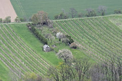 Wiosna Orzący pole ogród Obraz Stock