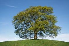wiosna osamotniony drzewo Zdjęcia Royalty Free