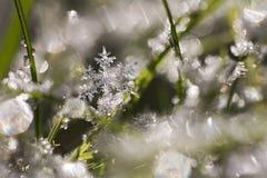 Wiosna płatek śniegu Obrazy Royalty Free
