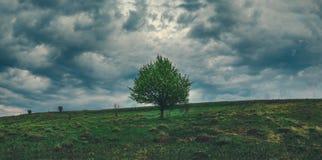 Wiosna panoramiczny krajobraz z osamotnioną narastającą jabłonią na tle ciemne burzowe chmury w dramatycznym chmurzącym niebie obrazy royalty free