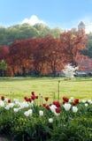 wiosna park zdjęcia royalty free