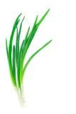 Wiosna piękne cebule Fotografia Stock