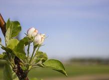 Wiosna potencjał Zdjęcia Stock