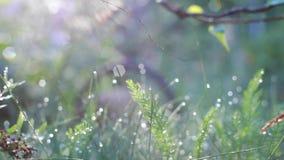 Wiosna promienie światło w rosie zbiory