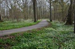 Wiosna przejściem fotografia stock