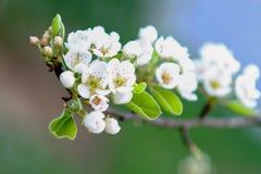 Wiosna przy drzwi Fotografia Royalty Free