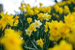 Wiosna przy drzwi Zdjęcia Stock