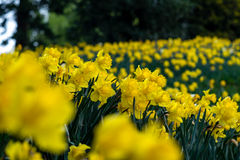 Wiosna przy drzwi Fotografia Stock