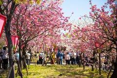 Wiosna przy Osaka Fotografia Stock