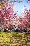 Wiosna przy Osaka Zdjęcie Stock