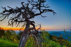 Wiosna przy Scenicznych Błękitnych grani Parkway Appalachians Dymiącą górą obraz royalty free