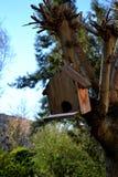 Wiosna przychodził w wróbla ` domu zdjęcie stock