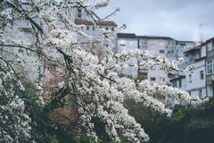 Wiosna przychodzi obrazy royalty free