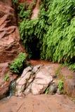 wiosna pustynna roślinność Zdjęcia Royalty Free