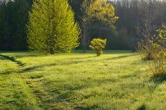 Wiosna ranek Zdjęcia Stock