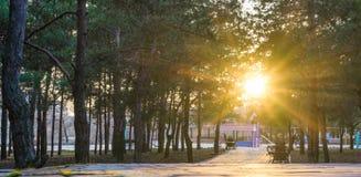 Wiosna rekreacyjny ślad w parku Fotografia Royalty Free