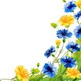 Wiosna remisu kwiaty Fotografia Stock